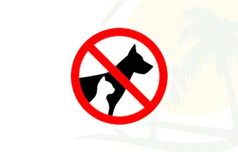 Dogs not Allowed, Camping Partaccia 2 La Partaccia